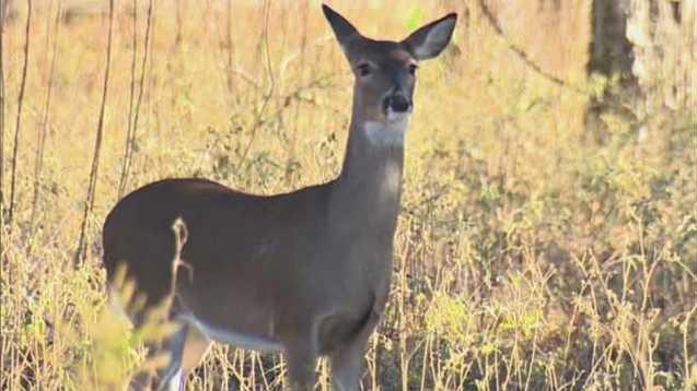 deer-generic_37915979_ver1.0_640_360_1550113562310_72845627_ver1.0_640_360_1550126400826.jpg