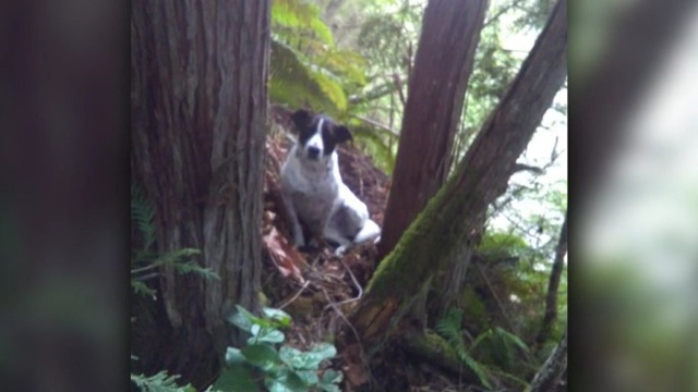 dog-stays-by-washington-hikers-side-_1556372161501_84643945_ver1.0_640_360_1556385011635.jpg