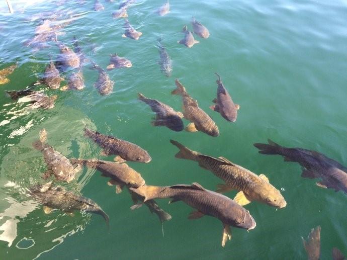 Big Little Fish Dreams Meaning And Interpretation