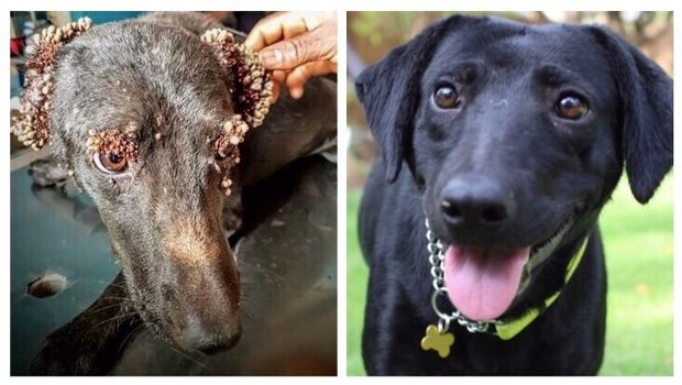 And Deformed Dogs Maggots Ticks