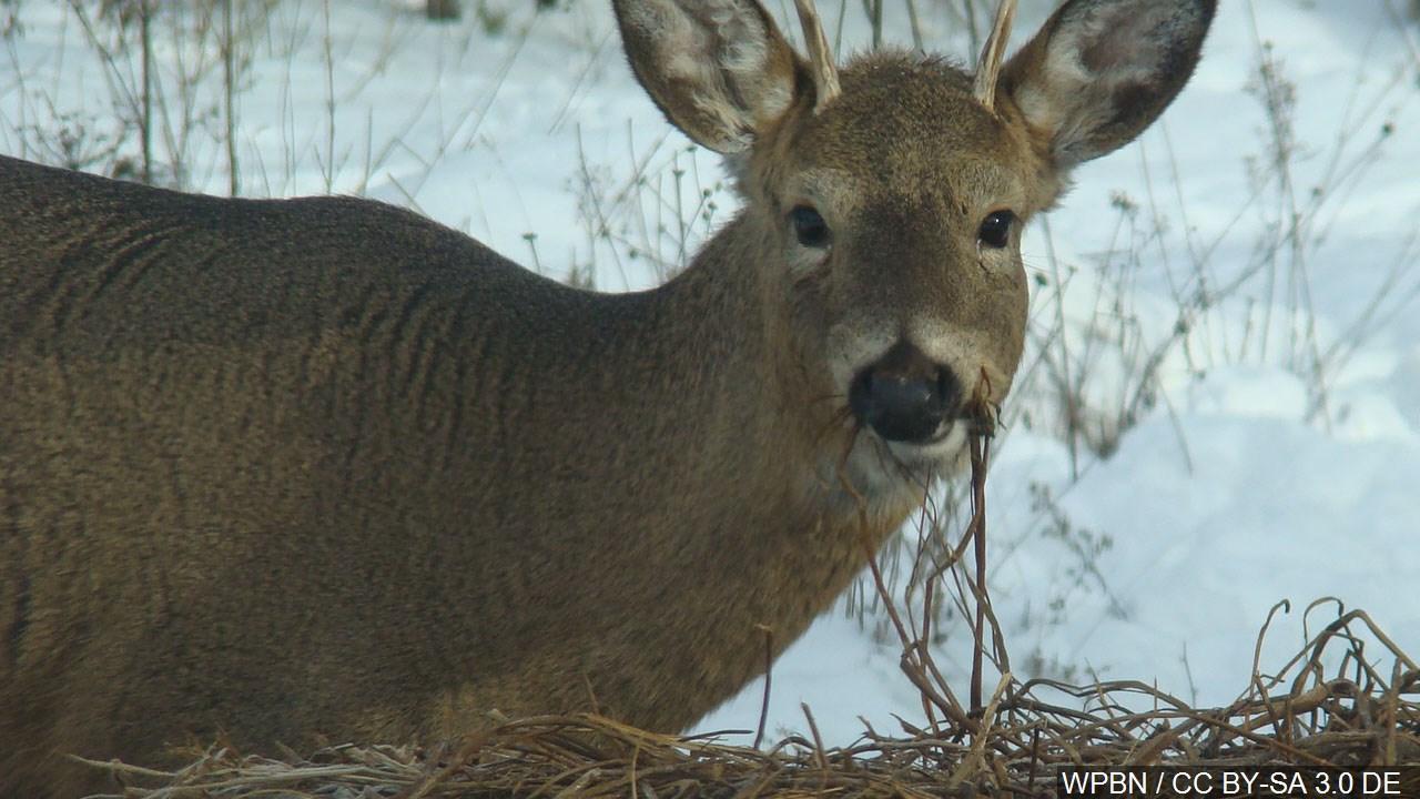 deer_1458073027105.jpg