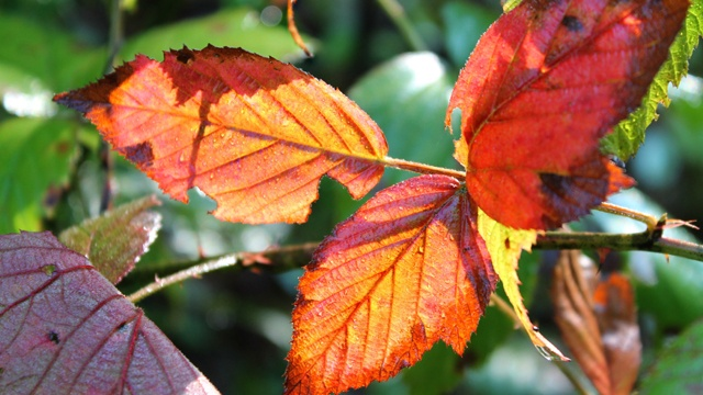 Why Fall Leaves Change Color – WJET/WFXP/YourErie.com