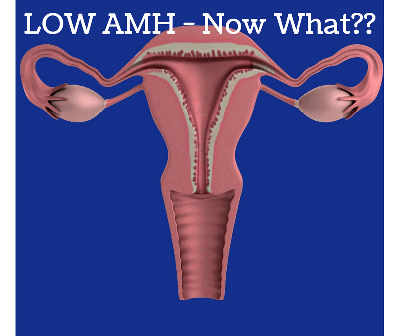Low AMH – Now What?