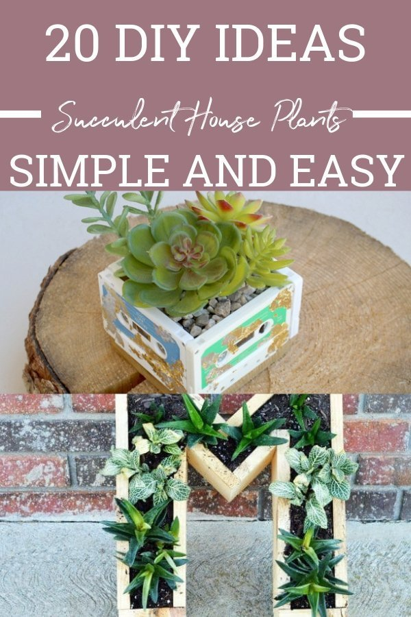 If you're looking for some fun and unique ways to decorate with succulent house plants, look no further than these great options!