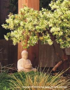 Buddha under Plant optimized 400 - copyright