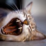cat toothbrush