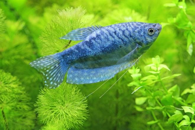 fish as pets