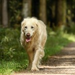 how do you know if your dog is suffering