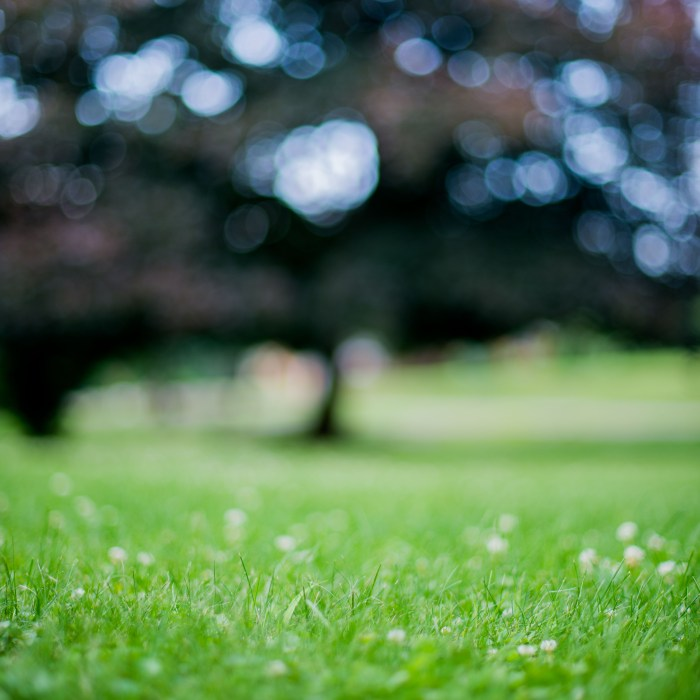 bokeh of grass