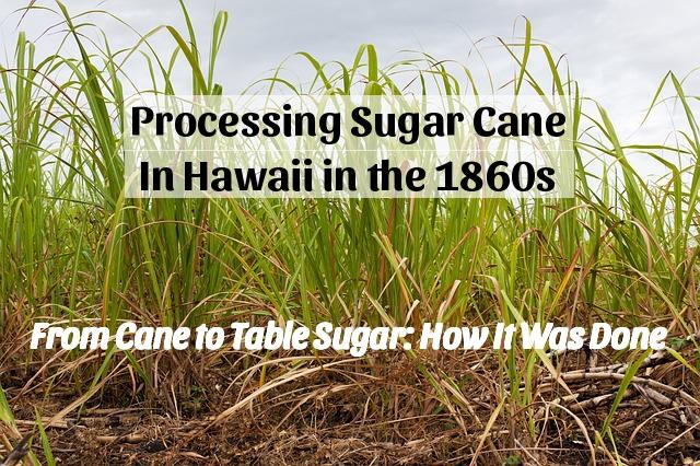 sugar cane production 1860 hawaii