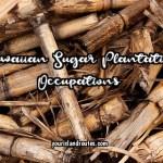 What Occupations Did They Do on Hawaiian Sugar Plantations?