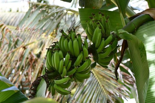 cape verde produce