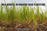 Male Workers on Hawaiian Sugar Plantations