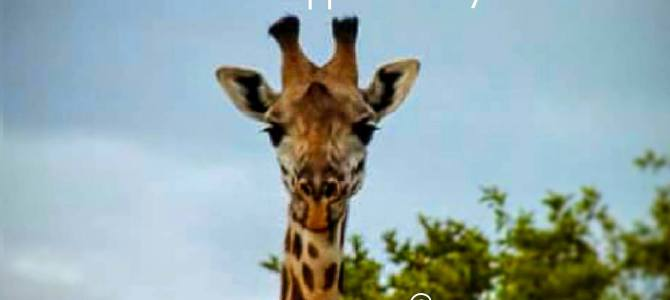 5 Amazing Places to See Giraffe in the Wild