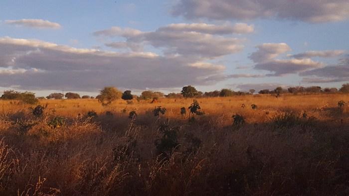 mazabuka landscape