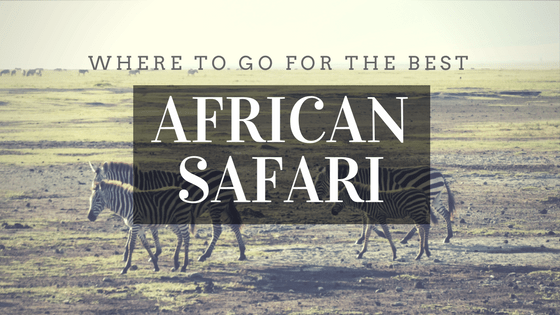 Where to go for the best African Safari