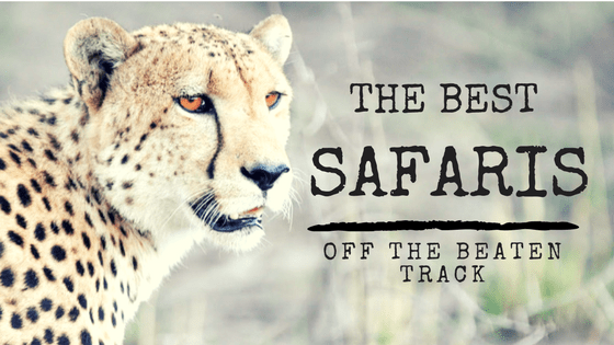 Where to Go: The Best Safaris Off the Beaten Track