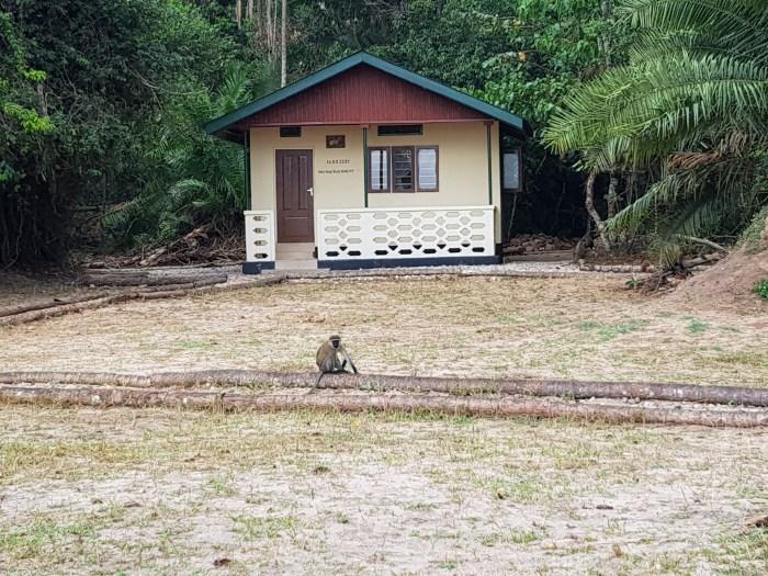 Rubondo Island Tanapa Banda