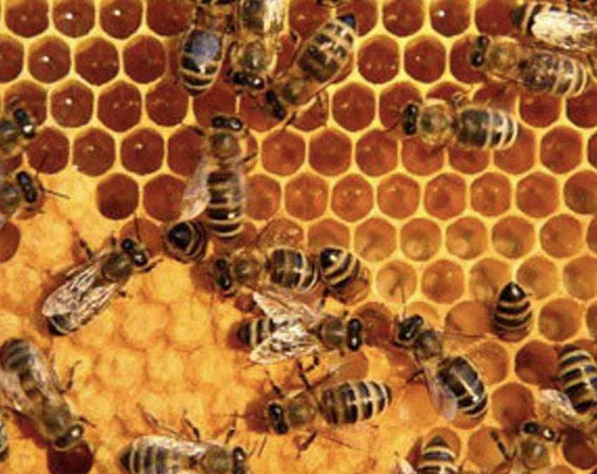 This Bee Product Has Enormous Benefits for Your Health