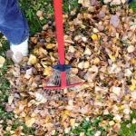 Preparing Your Garden for Winter: How to Do It Like A Pro