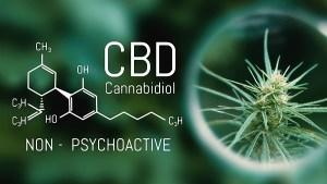 Cannabidiol - CBD