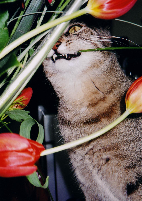 Indoor Plants Cats Eat