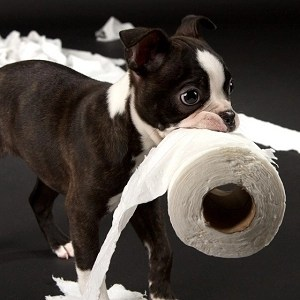Training a puppy by teaching household rules