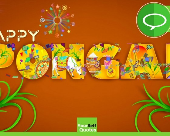 Happy Pongal Festival Wishes