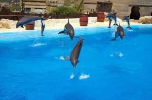 Mundomar Dolphins Benidorm water parks