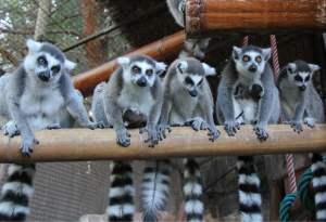 Mundomar zoo