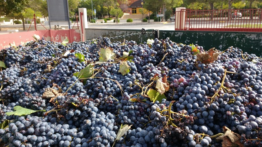 ecological wine at Yecla and Jumilla