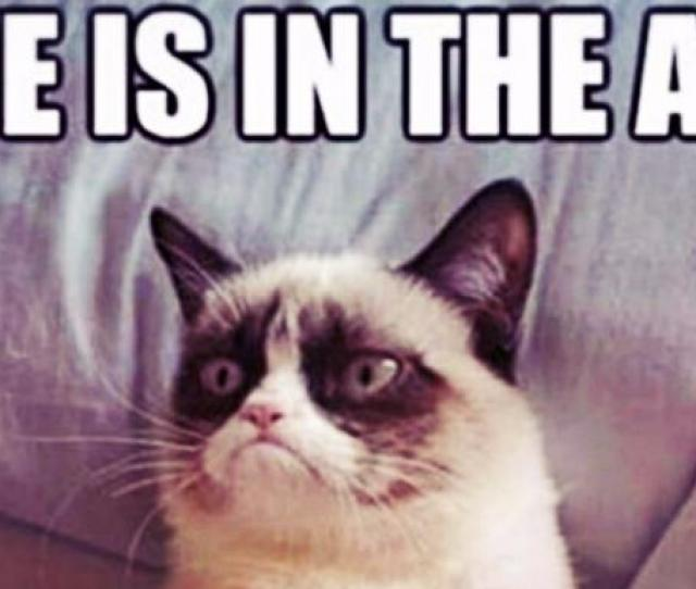 Who Is Grumpy Cat  Grumpy Cat Memes And Quotes About Love Life