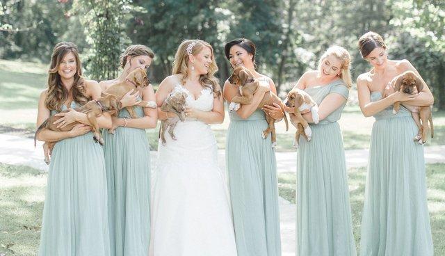 puppies at wedding