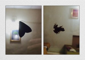 There's a moth & a frog on the window…