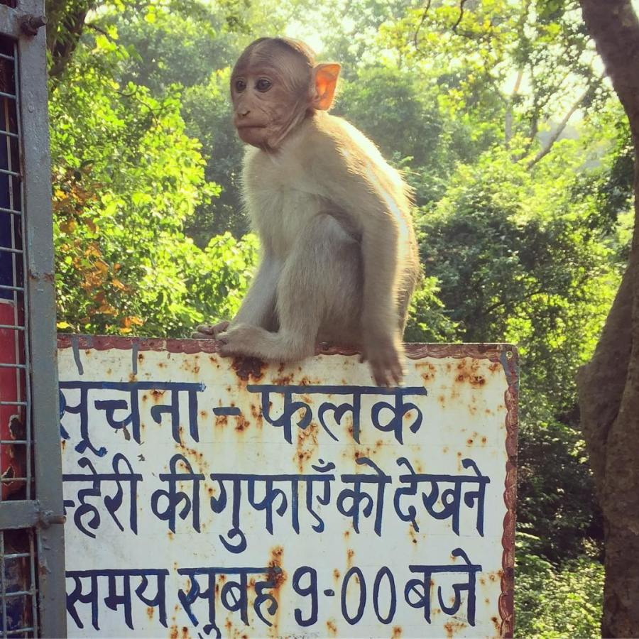 There are actually monkeys in the middle of Mumbai