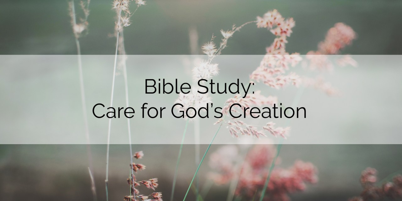 Bible Study: Care for God's Creation