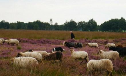 Devotion: Jesus is the Good Shepherd