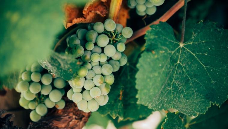 Devotion: Jesus is the Vine