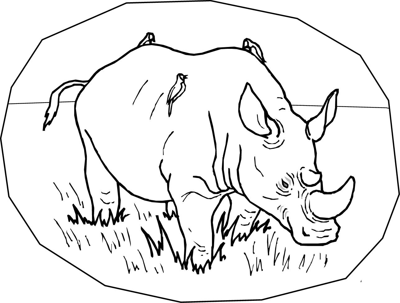 rhinoceros coloring 코뿔소 색칠