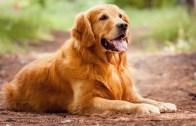 Köpeğini Mutlu Eden Adam