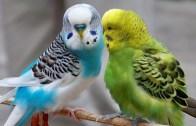 Kuştan İnanılmaz Yetenek