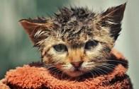 Rap Yaparak Kedisine Duş Aldıran Adam