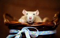 mouse-wallpapers-9