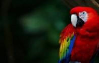 ruyada-papagan-kusu-gormek