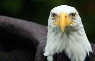 eaglesnextdoor_1920