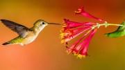 Arı Kuşları Adlarının Hakkını Vermiş