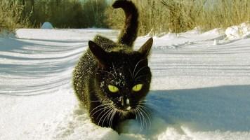 Kedilerin Kar Tecrübesi