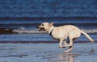 Bu Köpeği Yakalamak İmkansız