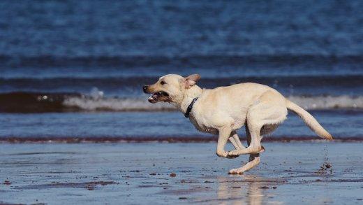yakalanamayan köpek