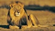 Safari Pikniğine Davetsiz Misafirler!